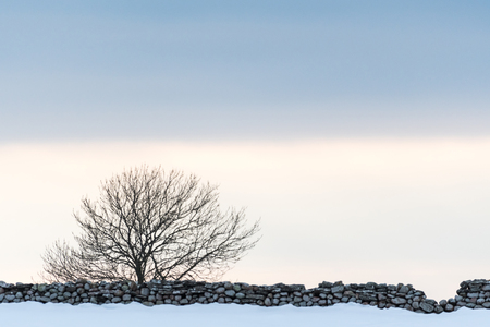 Lone bare tree by a stonewall in a snowy landscape