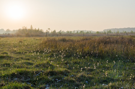 Beautiful misty evening by a marshland at the swedish island Oland Stock Photo