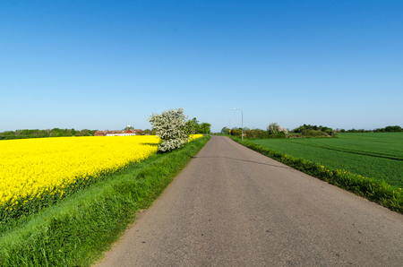 Country road through a colorful landscape by springtime at the swedish island Oland Stock Photo