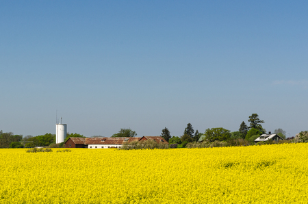 Countryside view with a blossom canola field at the swedish island Oland Stock Photo