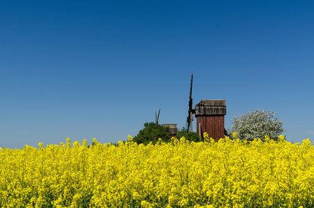 Old red wooden windmills by a blossom rapeseed field at the swedish island Oland Stock Photo