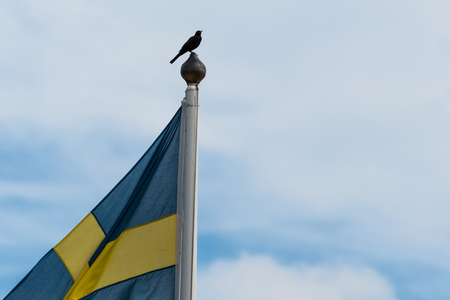 The swedish national bird - blackbird - sitting on the top of a flag pole with a swedish flag