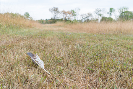Lost bird feather on the ground in a grassland