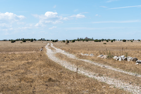 Dirt road through a plain and dry grassland at the swedish island Oland