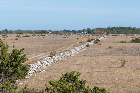 Dried grassland by summer season at the swedish island Oland