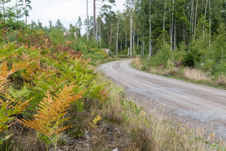 Colorful bracken plants by a gravel roadside in a forest