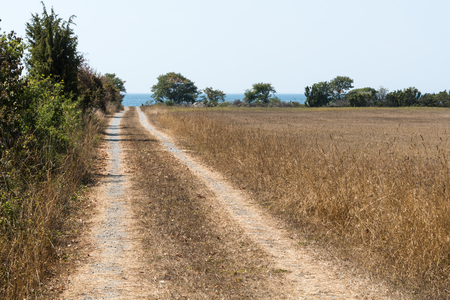 Dirt road to the coast in a dried landscape at the swedish island Oland Stock Photo