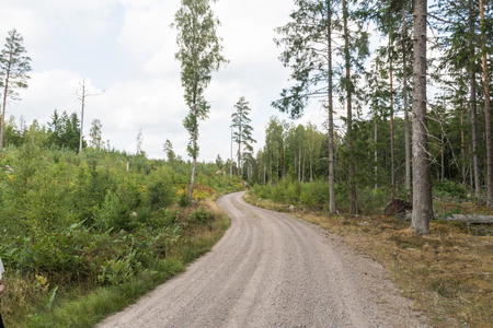 Winding gravel road through a green coniferous forest