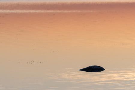 Dark rock by sunset in orange colored water