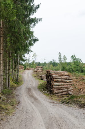 Log piles by a winding gravel roadside in a spruce tree forest