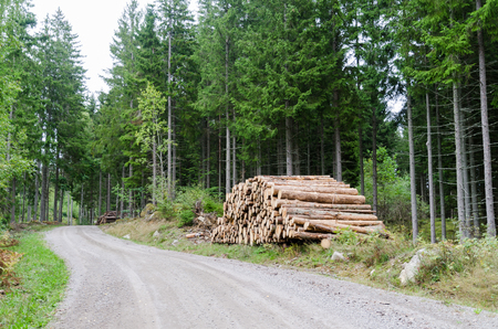 Woodpile by a winding country roadside in a spruce tree forest