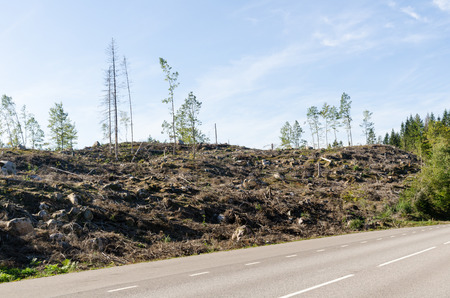 Clear cut forest landscape by roadside