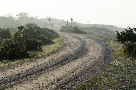 Winding misty gravel road surrounded of junipers at the swedish island Oland