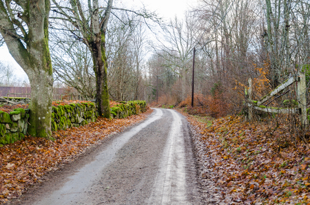 Gravel road by fall season in an old landscape with a moss grown stone wall Stock Photo