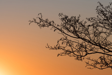 Bare alder tree branches by a colorful sunset