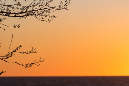 Tree branches by sunset with a lot of copy space Stock Photo