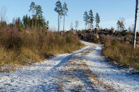 Snowy dirt road through a bright forest