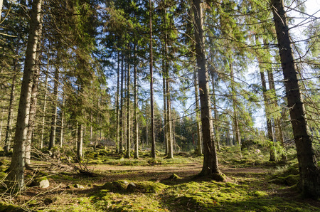 Beautiful glade in a wonderful green and mossgrown forest Stock Photo