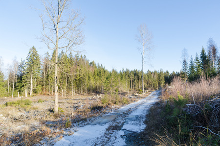 Snowy country road through a bright woodland Stock Photo