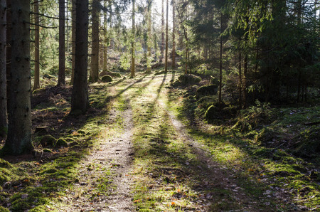 Mossy footpath in a bright green coniferous forest Stock Photo