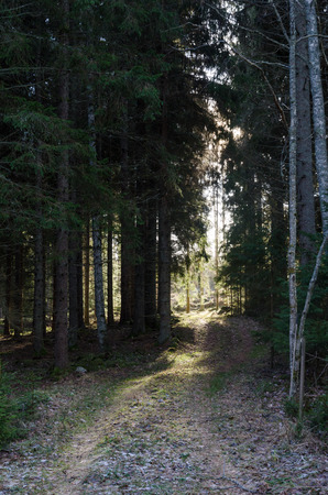 Footpath in a coniferous forest leading to a bright glade in the forest Stock Photo