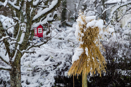 Traditional sheaf of oats and a bird feeder in a nordic garden in wintertime