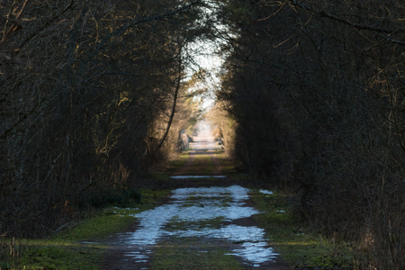 Bright hope with melting snow and light in a tunnel by a narrow country road Stock Photo