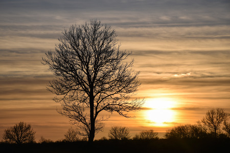 Big bare tree silhouette by the setting sun