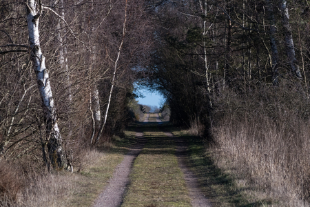 Springtime by a country road with bright light at the end of the tunnel Stock Photo
