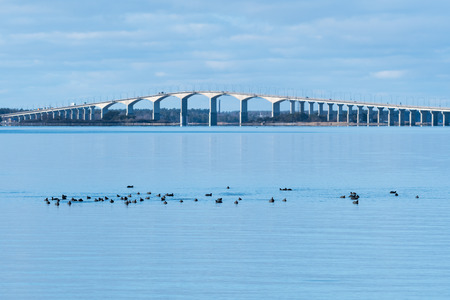 Overwintering flock with Coots in the Baltic Sea in Sweden with the Olandbridge in the background