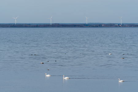 View from the Baltic Sea in Sweden with windmills, waterfowl and calm blue water Stock Photo