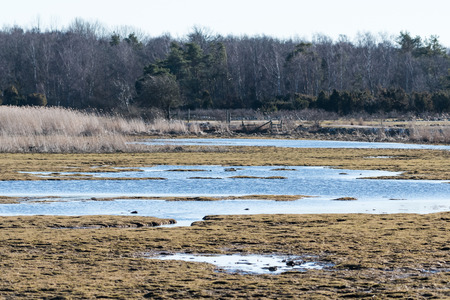 Swampland by early springtime at the swedish nature reserve Beijershamn on the island Oland Stock Photo