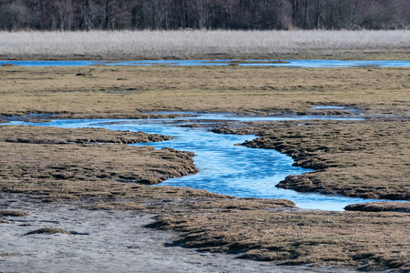 Wetland by early springtime in the nature reserve Beijershamn at the swedish island Oland