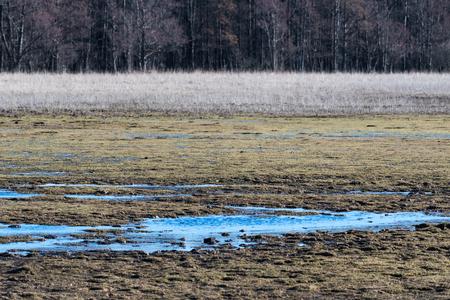 Marshland by early spring season in the nature reserve Beijershamn at the swedish island Oland Stock Photo