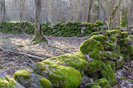Green old historical mossy dry stone walls in a swedish nature reserve