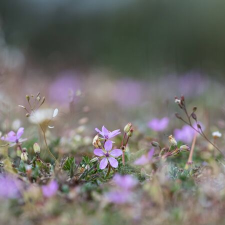 Tiny pink flower against a natural blurred background in a low angle image Stok Fotoğraf