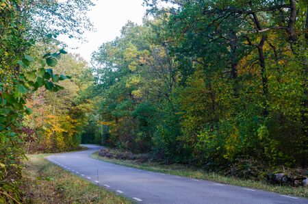 Curved country road through a forest in  fall season colors Stock fotó