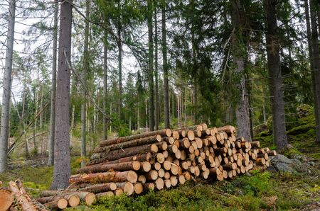 Woodpile in a green and bright coniferous forest 스톡 콘텐츠