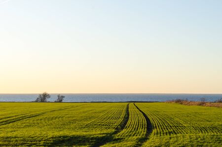 Patterns in a green corn field by the coast at the island Oland in the Baltic Sea Banco de Imagens