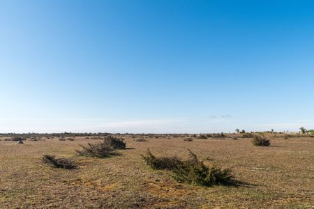 Great wide open barren landscape with junipers on the island Oland in Sweden