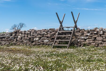 Blossom Bellis perennis by a dry stone wall with a wooden stile in a swedish nature reserve on the island Oland Stock Photo