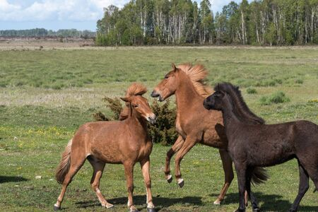 Playful horses in a green grassland in spring season