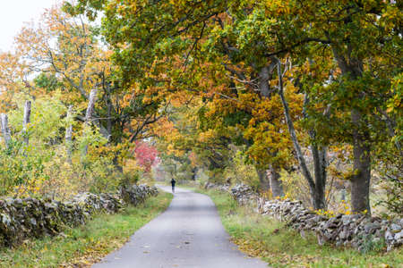 Country road surrounded by dry stone walls in fall colors