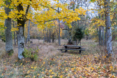 Picnic place in a forest glade in fall season on the island Oland in Sweden 写真素材