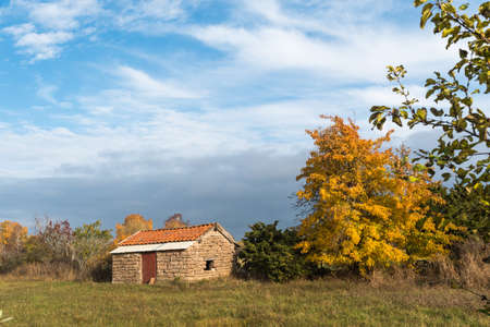 Golden tree by an old shed in fall season on the swedish island Oland 写真素材