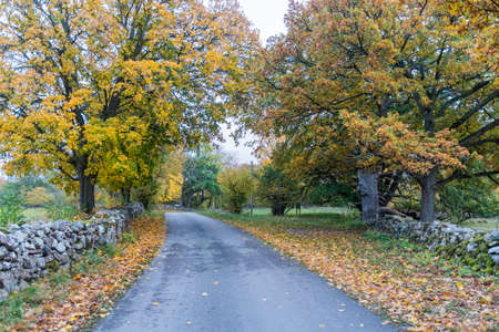 Beautiful fall colors by a country road on the swedish island Oland