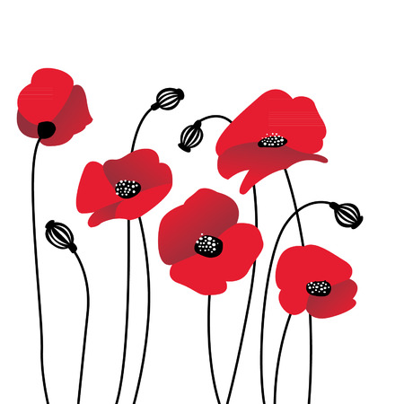 Red poppies in a row. Isolated on white background