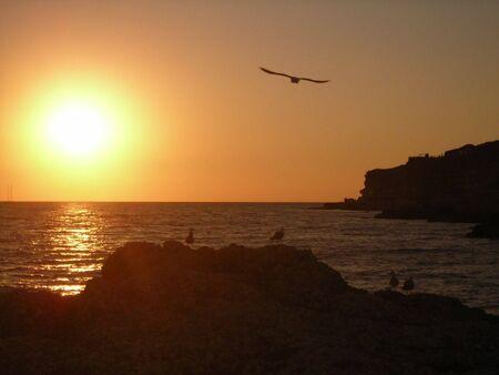 Gull Bird  on Sunset photo