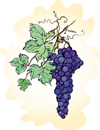 Vector illustration with grapes with leaves