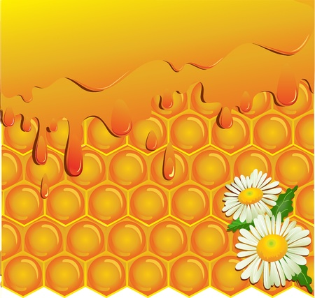 Flowing honey and honeycomb background with chamomile Vector